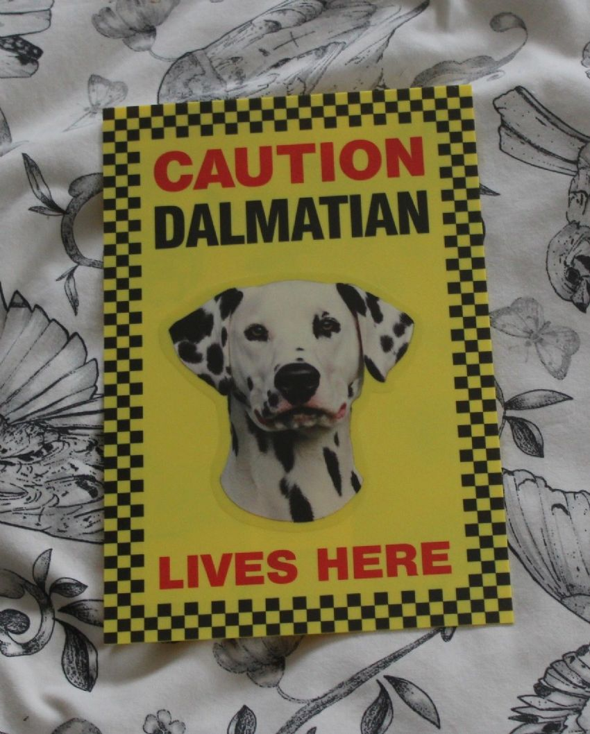 CAUTION DALMATION LIVES HERE -  DOG SIGN